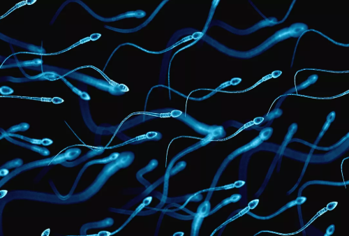 smoke effect on sperm